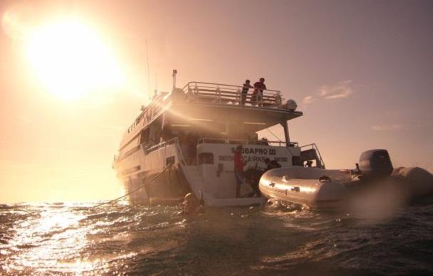 Great Barrier Reef Cairns (c) Anja Knorr