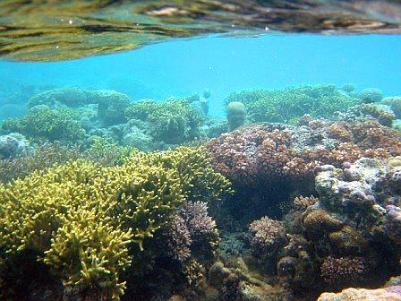 Schnorcheln Korallen Südsee (c) Anja Knorr