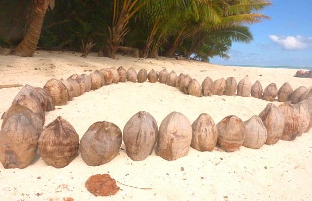 Kokosnüsse Cookinseln Strand (c) Anja Knorr