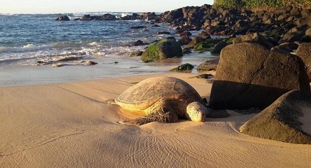 Oahu Hawaii USA (c) Peter Liers (2)