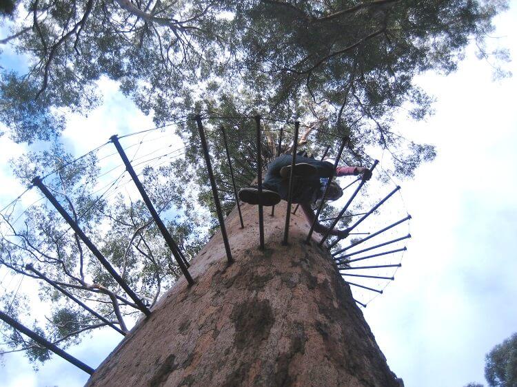 Karri Bäume Australien
