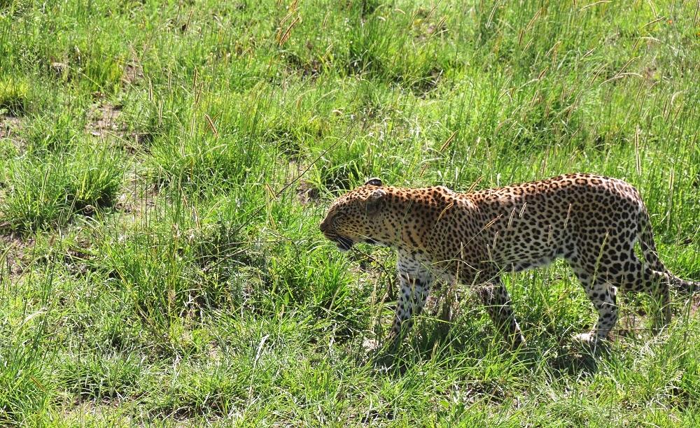 Serenget6i Safari Tansania