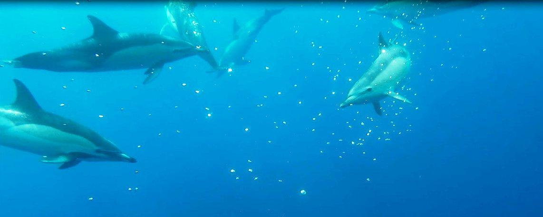 Porto Santo Delfine