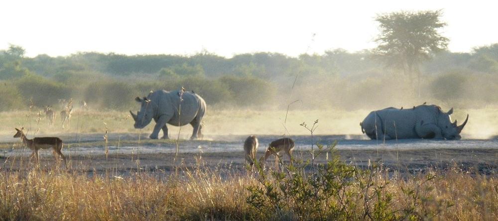 Botswana Khama Rhino Sanctuary