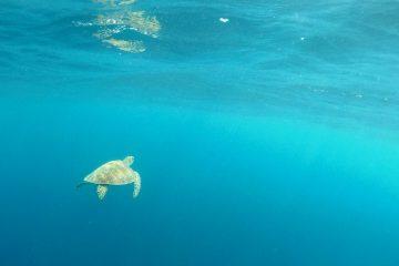 Soziale Projekte_Meeresschildkröte